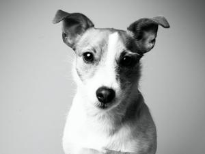 Blogger- + Influencer-Skills: Mein Hundeblog
